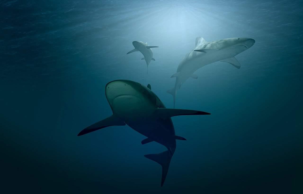 Nuove specie nel mediterraneo, anche gli squali