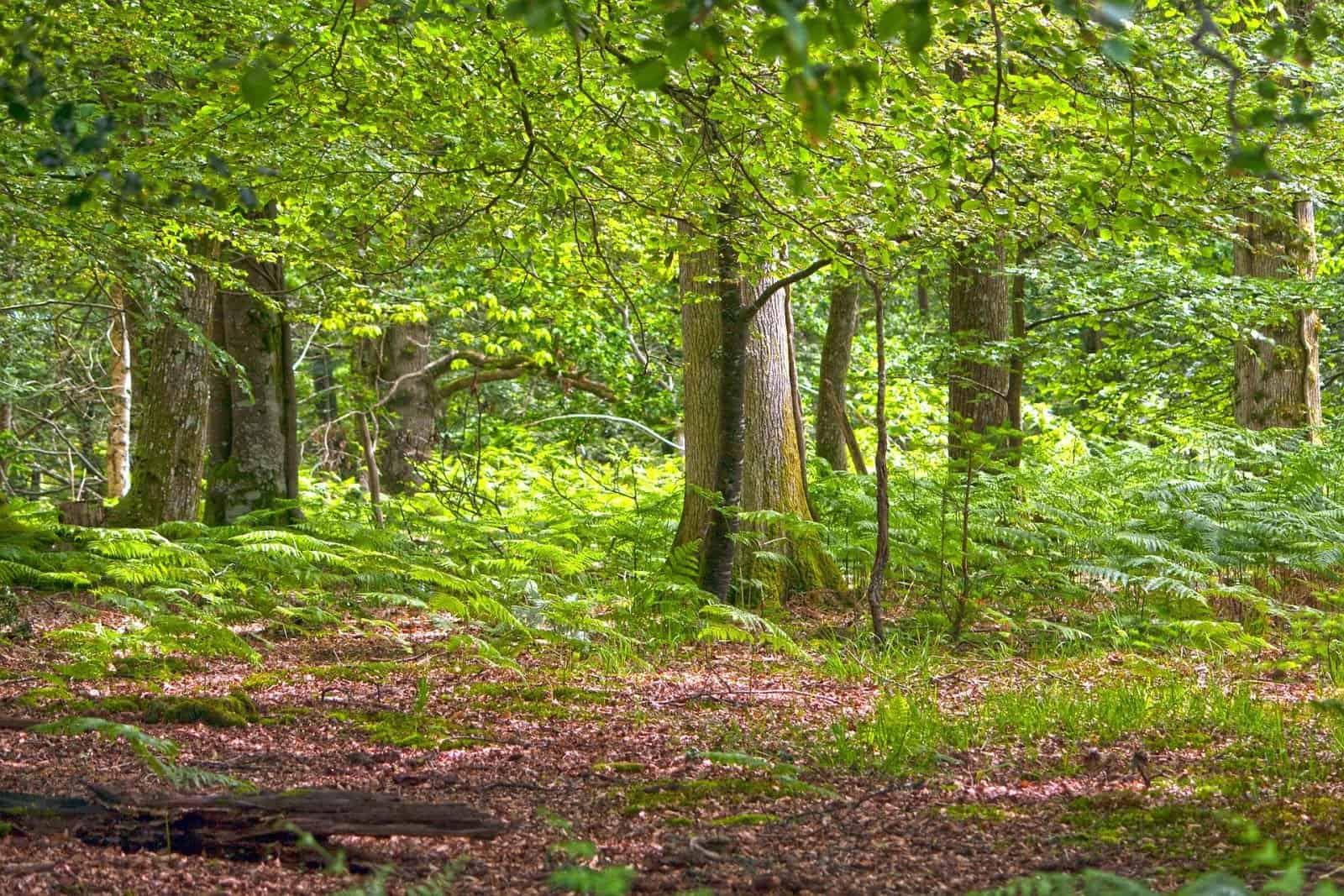 Respirare la foresta: come varia e come prevedere la concentrazione di olii essenziali