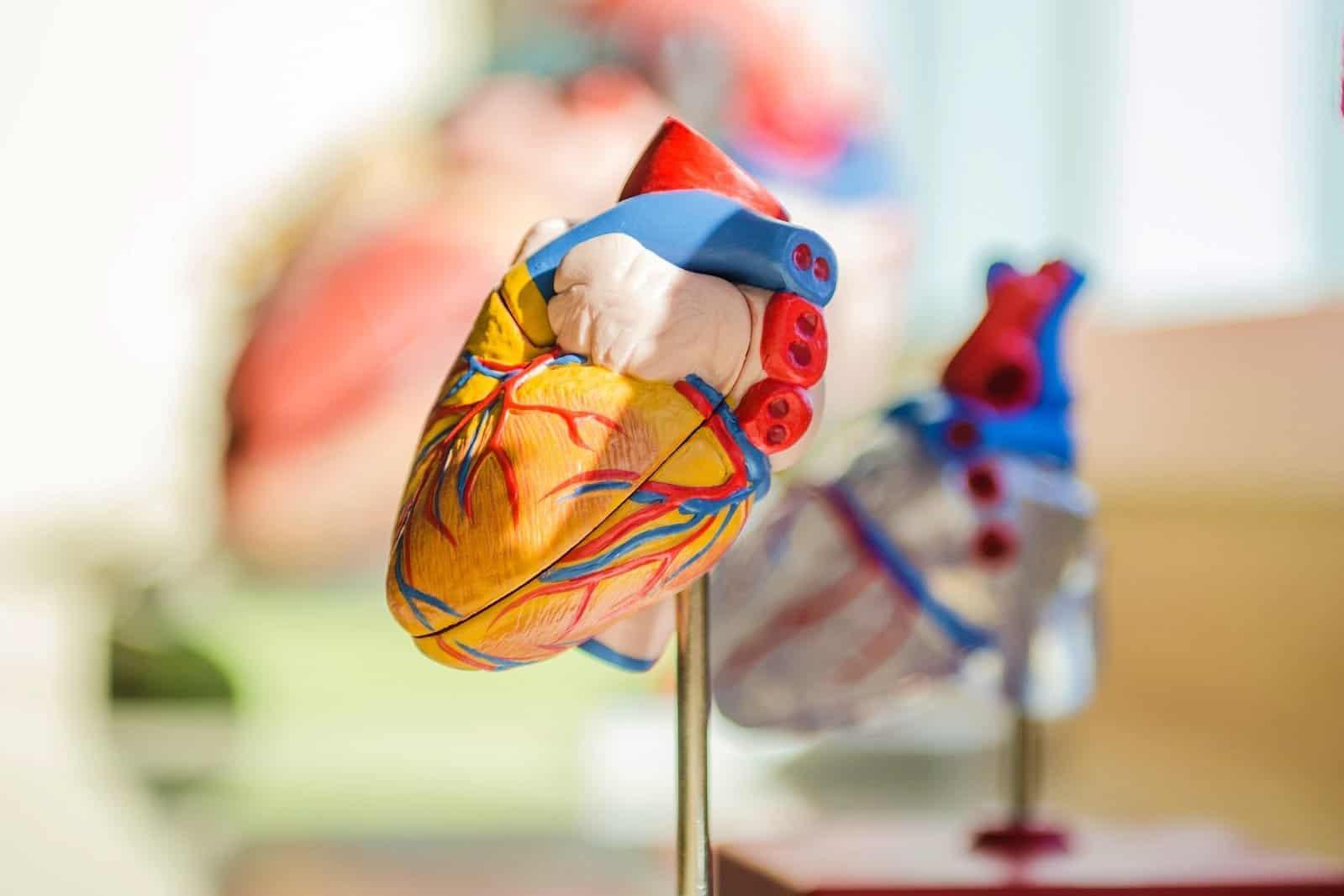 innovazione tecnico-scientifica: verso un cuore artificiale