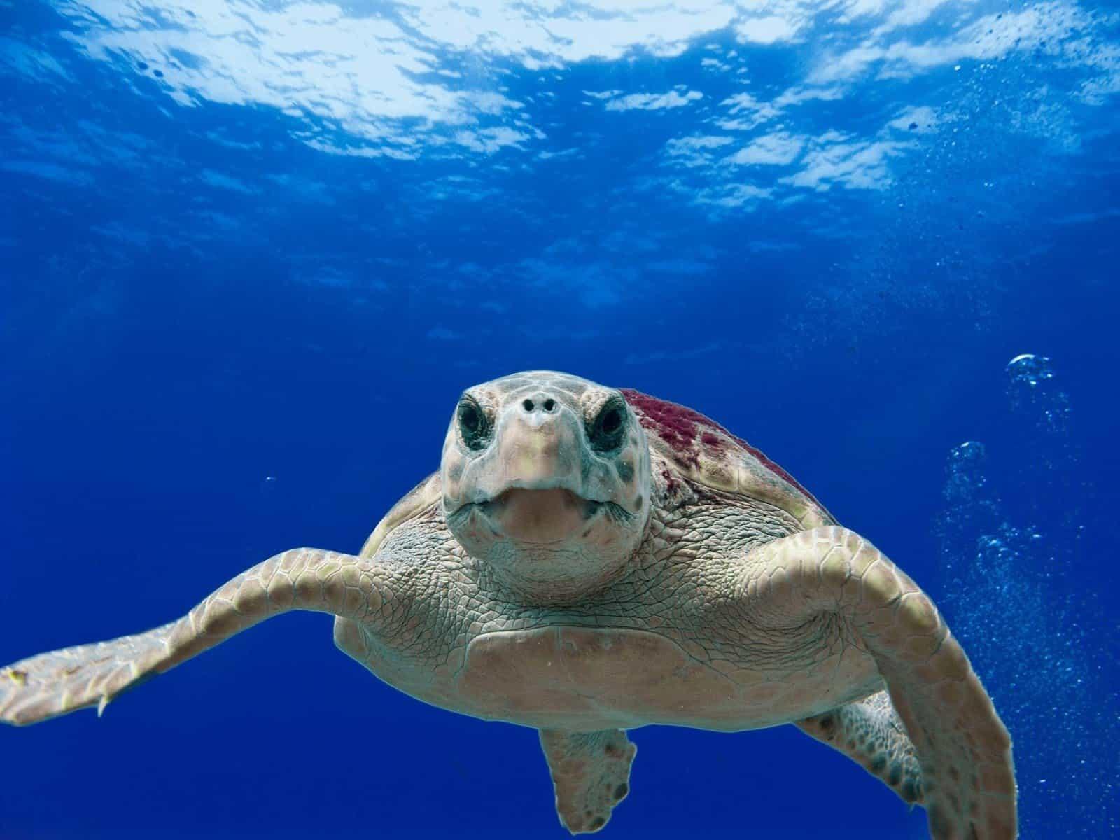 Vacanze, barca e un progetto ecosostenibile per salvare le tartarughe marine