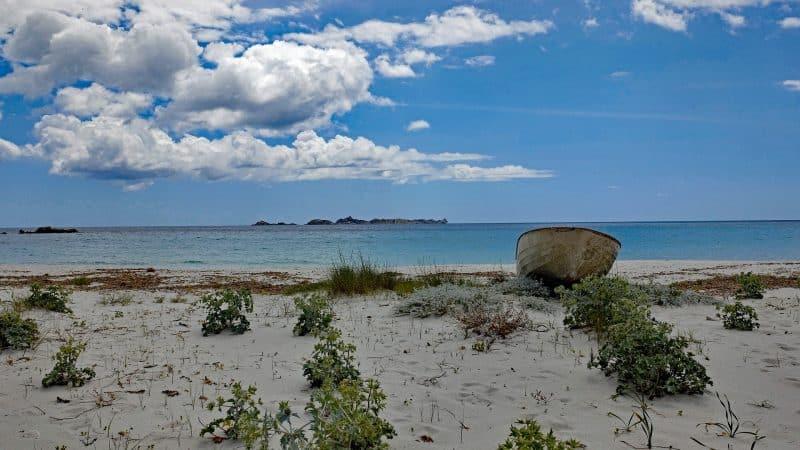La biodiversità delle spiagge e l'impatto dell'uomo sulla natura