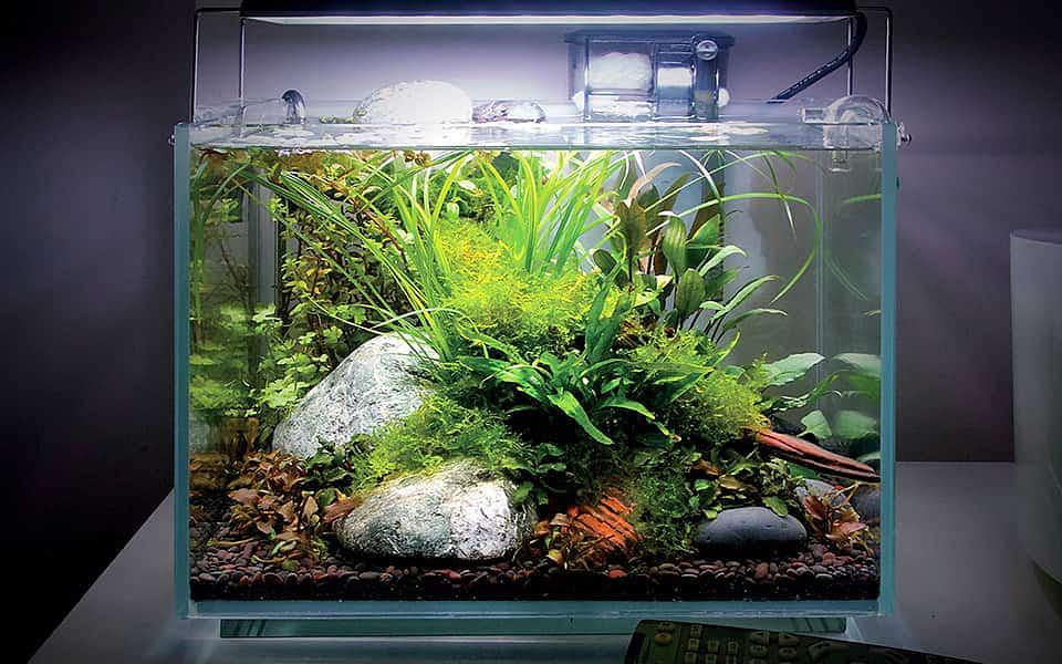 Riscoprire il benessere e la bellezza attraverso un acquario naturale