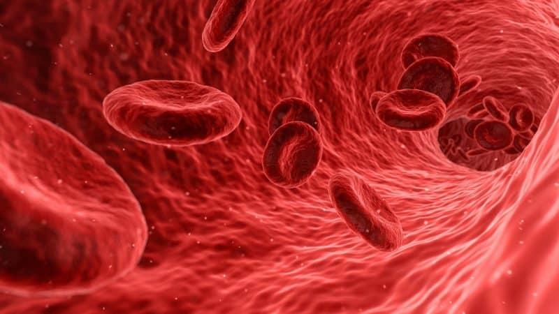 Covid-19, lo studio: analizzare il sangue per prevedere il decorso