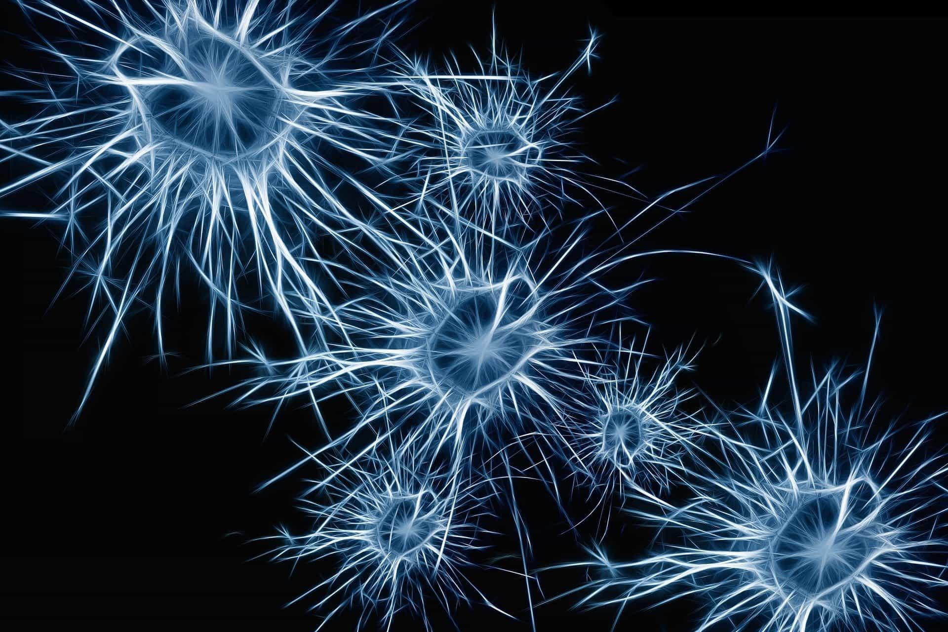Probiotici utili per proteggere e migliorare le funzioni cerebrali