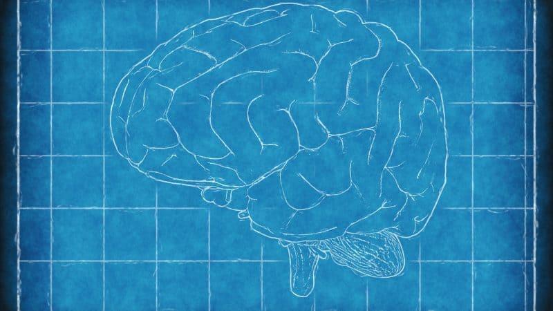 Nuova possibile chiave per contrastare il declino cognitivo
