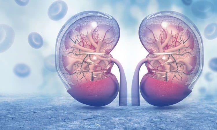 Covid e salute dei reni: danno renale acuto ed esiti a lungo termine